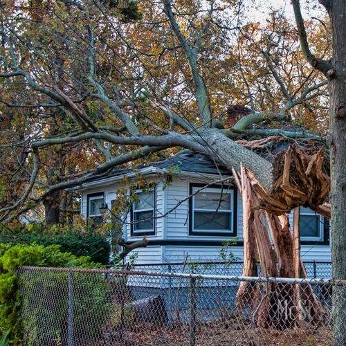 From leaks to uprooted trees smashing down, we handle all sizes of emergency roof repairs.